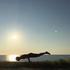 写真 - 2540cb-yoga.jpg